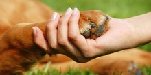 Política Pública Distrital de Protección y Bienestar Animal