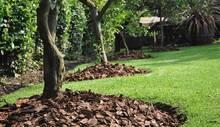 Política para el Manejo de suelo de Protección en Macondo